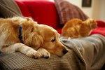 The Best Furniture Fabric for Pet Owners