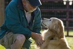 The Effects of Foster Care on Dogs