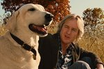 The Greatest Dog Movies of All Time