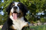 The Top 10 Most Active Dog Breeds