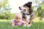 Tips For Keeping A Dog Away from Baby's Crib