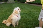 Tips for Training Your Dog To Stay When Off Leash