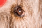 What Are the Black Specks in My Dog's Eye?