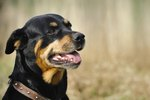 What Are the Strongest Dog Breeds?