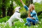 What Do Dog Behaviorists Do?