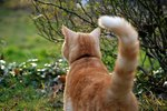 What Does It Mean When A Cat's Tail Vibrates?