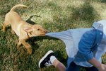 What To Do If Your Dog Growls at Kids