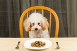 What Type of Food Do Most Dogs Prefer?