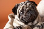 What is Reverse Sneezing in Dogs?