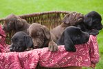 Which Dog Breed Has the Most Puppies in a Litter?