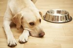 Why Do Dogs Move Their Food Bowls?