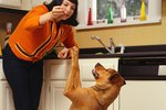 Why Do Dogs Lift Their Paws To Beg?
