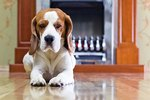 Why Do Dogs Slip on Hardwood Floors?