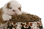 Why Some Dogs Rub and Roll In Their Food