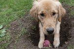 Why Do Dogs Bury Things?