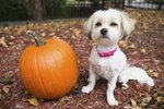 Here's Why You Should Be Feeding Your Dog Pumpkin