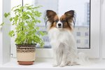 Why Is My Dog Eating House Plants?