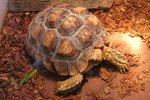 It's World Turtle Day!