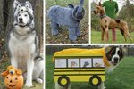 20 Costumes That Are Perfect For Big Dogs