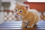 10 Ways to Keep Your Cat Happy