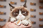 Cuteness Interviews Grumpy Cat