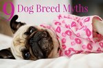 9 Silly Myths About Certain Dog Breeds