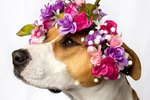 These Dogs Rock Flower Crowns Way Better Than You