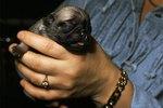 How to Burp Newborn Puppies