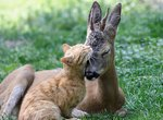 7 Amazing Interspecies Friendships We Can All Learn From