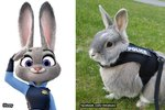 This Adorable Rescued Rabbit is the Real-Life Judy from Zootopia