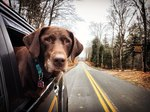 A Man's Inspiring Road Trip With His Terminally Ill Dog