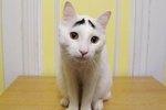 Cuteness Interviews Sam The Eyebrow Cat