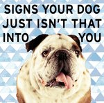 8 Signs Your Dog Hates You