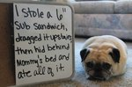 10 Pets Who Have Lost Their Dignity