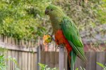 The Healthiest Diet for Parrots