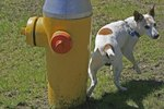 Why Dogs Scratch the Ground After Pooping