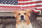 Adorable Patriotic Pets Are Casting Ballots In Record Numbers