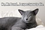 10 Signs Cats Are Evil Geniuses