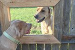 Brilliant Guy Builds Window For His Dogs & Their BFF Next Door