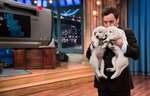 11 Cutest Animal Moments On Jimmy Fallon
