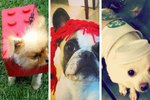 17 Last-Minute Pet Costume Ideas For Procrastinators