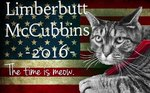 We're Not Even Kidding: This Cat Is Running For President