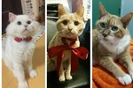 11 Newly Adopted Senior Cats That Will Melt Your Freaking Heart