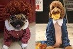 "7 ""Stranger Things"" Animal Costumes That Have Already Won Halloween"