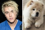 Justin Bieber's Fluffy Pup Has His Own Instagram & It's Too Cute