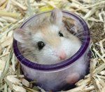 how-changing-hamsters-sleep-cycle