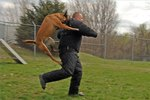 how-attack-dogs-trained