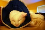 What to Feed a Cat on a Liquid Diet