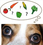 Which Vegetables Are Healthy for Dogs to Eat?