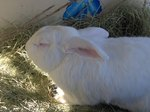 How to Heat a Rabbit Hutch